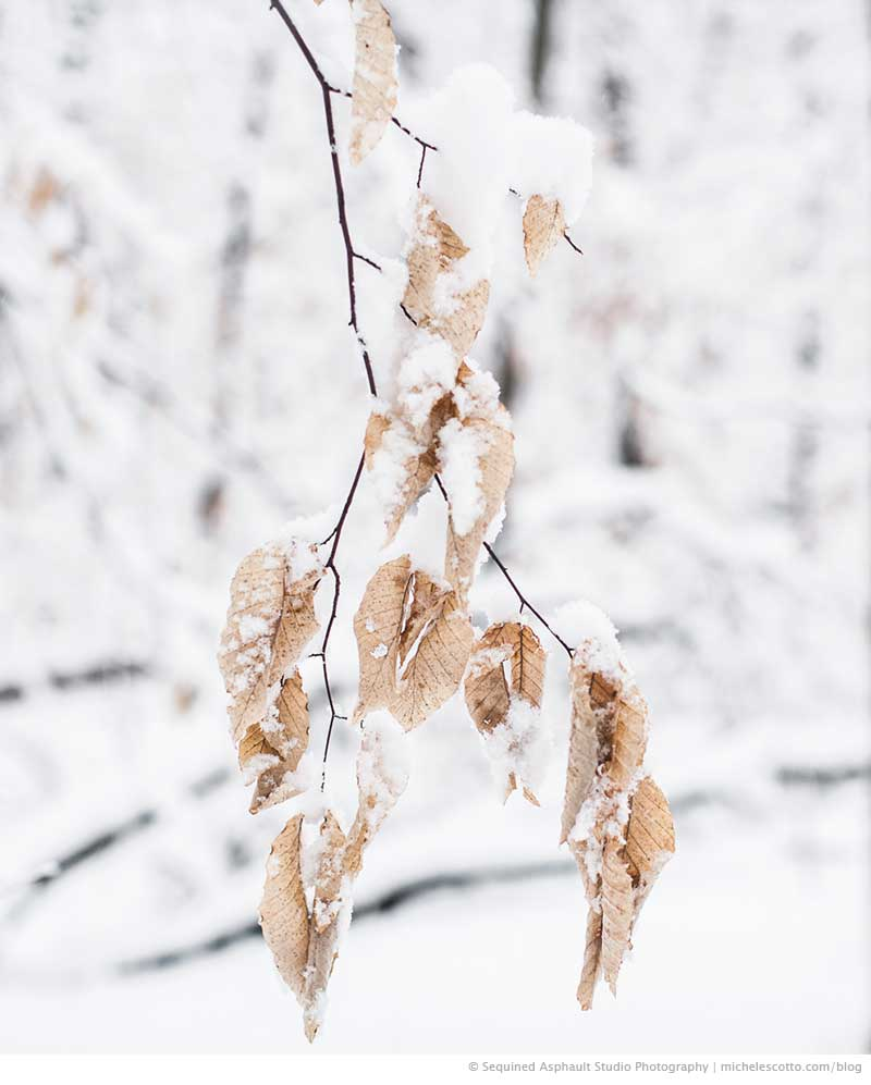 Arteries | branches in the snow | landscape photograph, Michele Scotto Trani http://sequinedasphault.com
